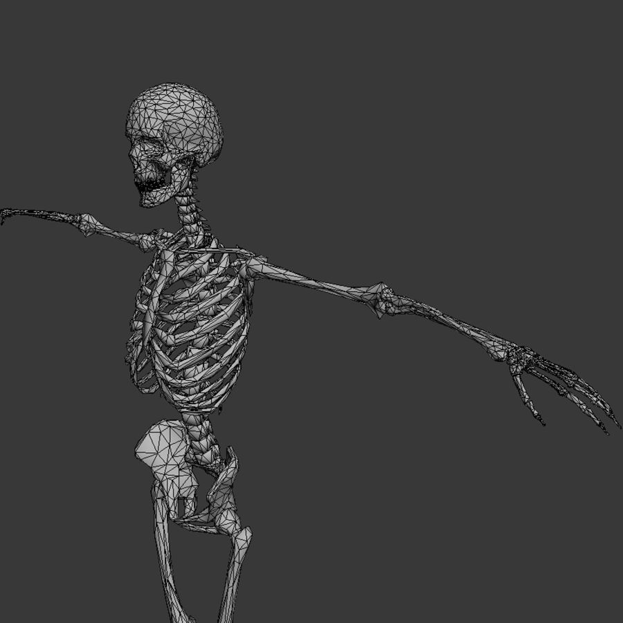 Skeleton royalty-free 3d model - Preview no. 10