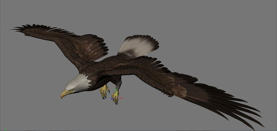 Aquila royalty-free 3d model - Preview no. 7