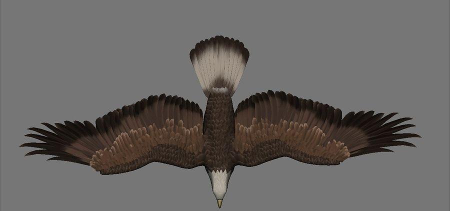 Aquila royalty-free 3d model - Preview no. 5