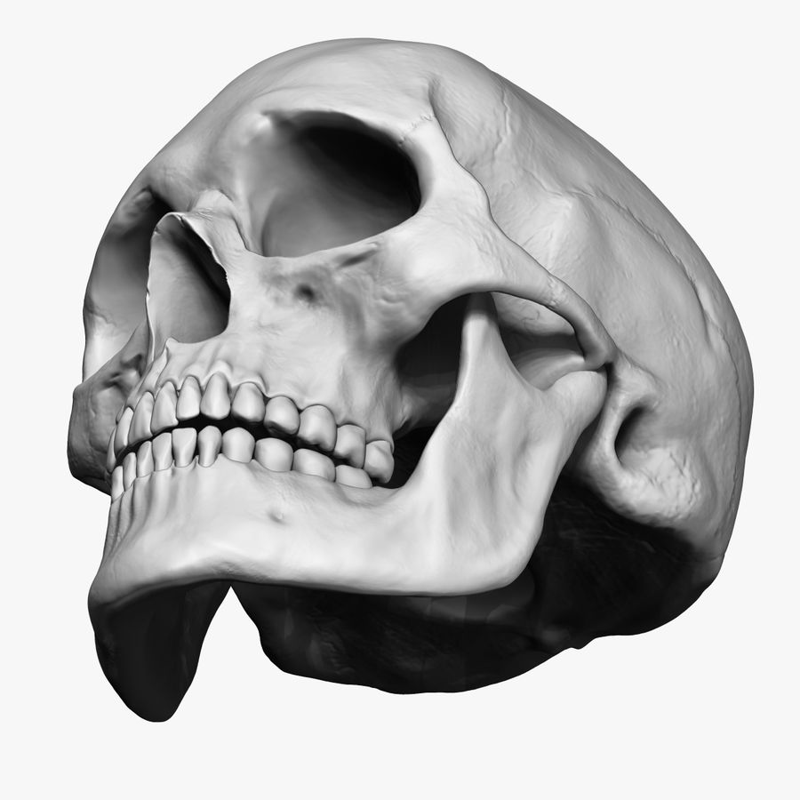 Caucasoid Female Skull Zbrush royalty-free 3d model - Preview no. 3