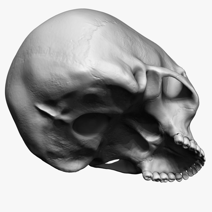 Caucasoid Female Skull Zbrush royalty-free 3d model - Preview no. 7