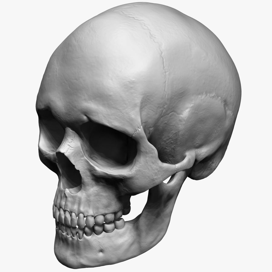 Caucasoid Female Skull Zbrush royalty-free 3d model - Preview no. 2