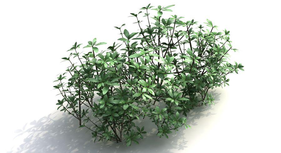 Small Bush Shrubs royalty-free 3d model - Preview no. 5