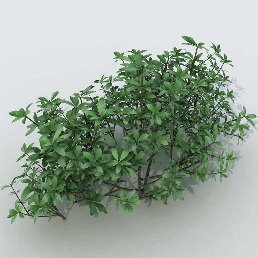 Small Bush Shrubs royalty-free 3d model - Preview no. 2