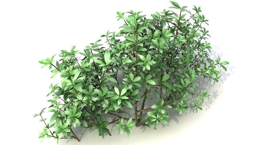 Small Bush Shrubs royalty-free 3d model - Preview no. 10
