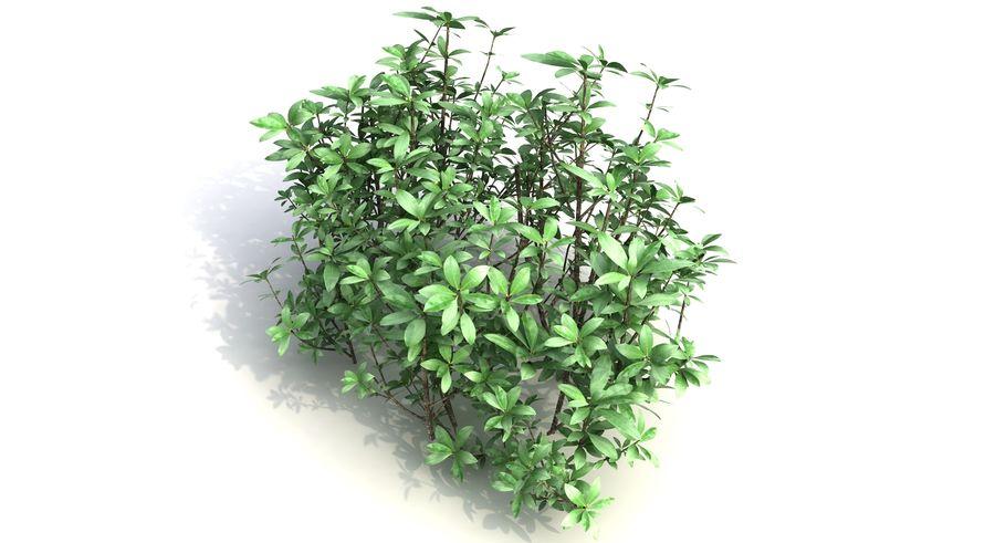 Small Bush Shrubs royalty-free 3d model - Preview no. 6