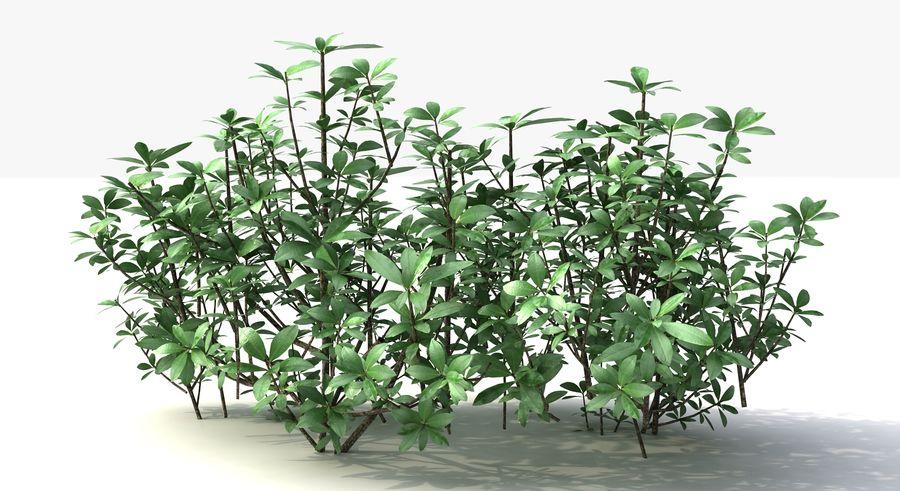 Small Bush Shrubs royalty-free 3d model - Preview no. 3