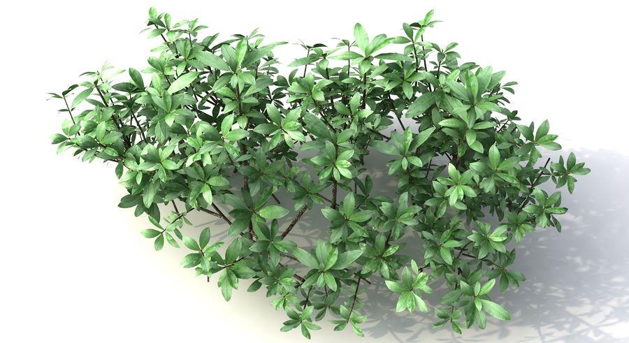 Small Bush Shrubs royalty-free 3d model - Preview no. 4