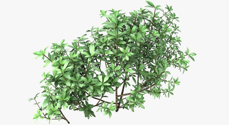 Small Bush Shrubs royalty-free 3d model - Preview no. 9