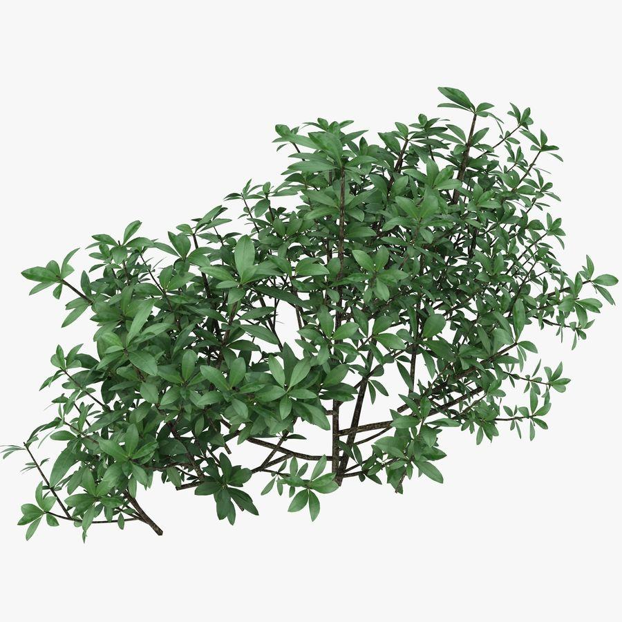 Small Bush Shrubs royalty-free 3d model - Preview no. 1