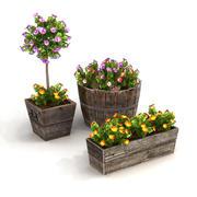 Potted Plants Bundle 1A 3d model