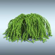 Bush stephanandra 3d model