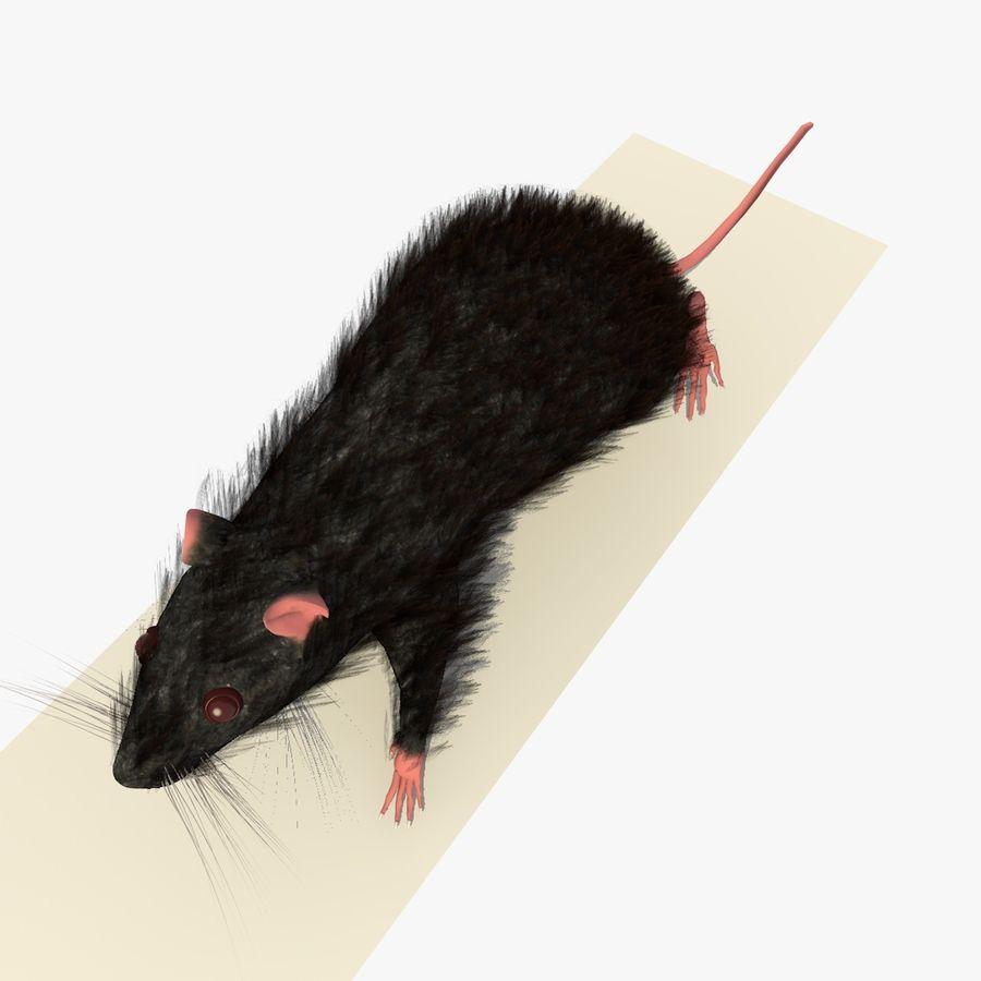 Крыса / мышь черная поза royalty-free 3d model - Preview no. 5