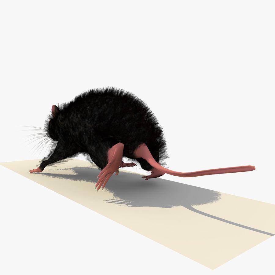 Rat/Mouse Black Walking Pose royalty-free 3d model - Preview no. 3