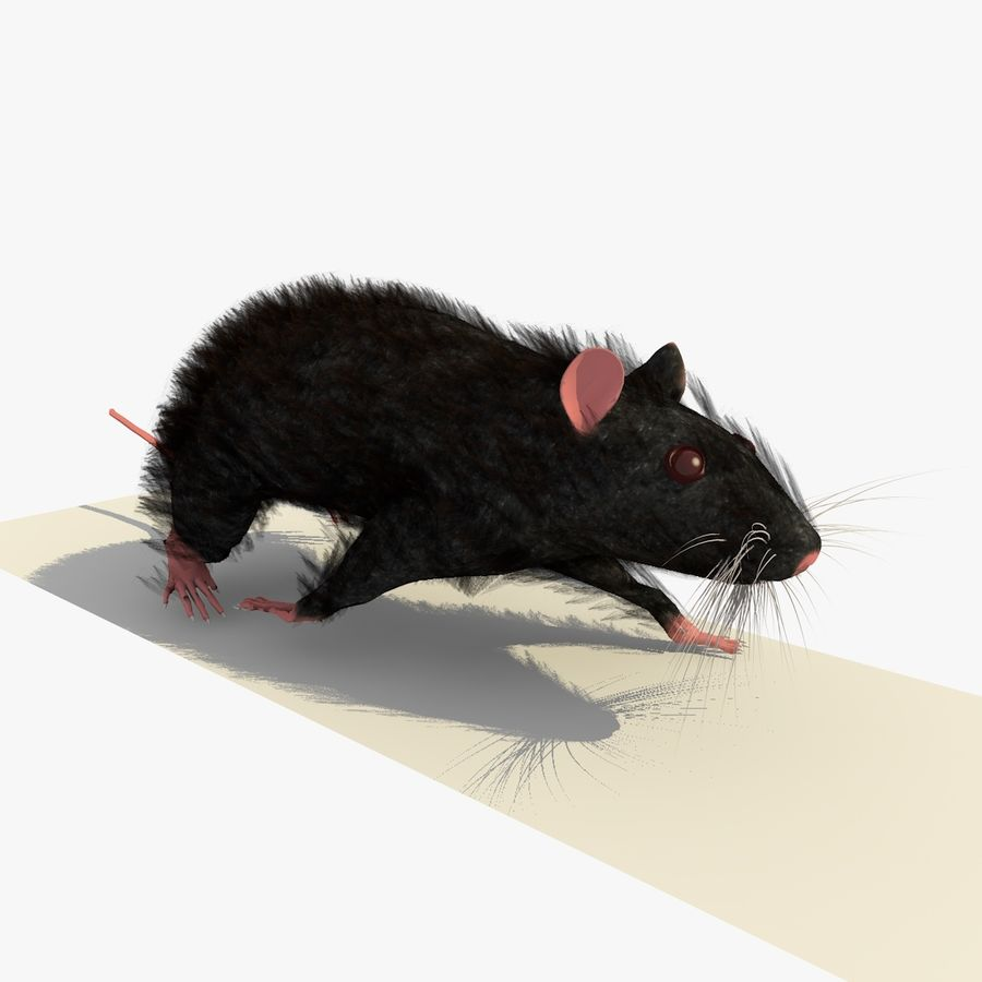 Rat/Mouse Black Walking Pose royalty-free 3d model - Preview no. 4
