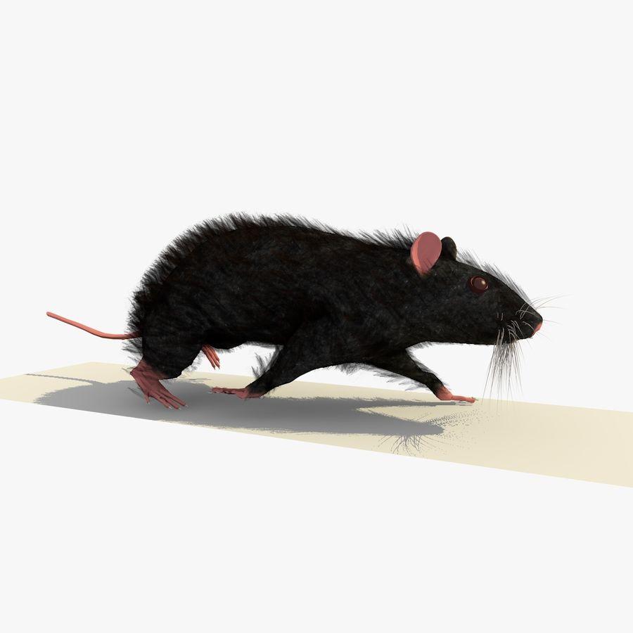 Крыса / мышь черная поза royalty-free 3d model - Preview no. 1