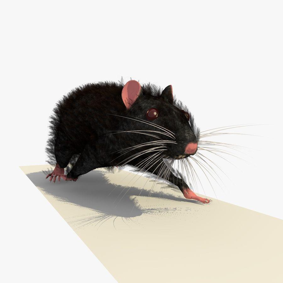 Крыса / мышь черная поза royalty-free 3d model - Preview no. 6