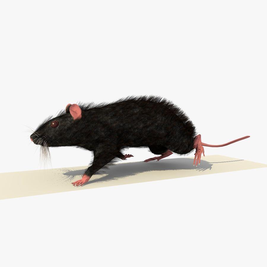 Крыса / мышь черная поза royalty-free 3d model - Preview no. 2
