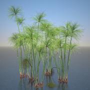 Ensemble de papyrus Cyperus 3d model