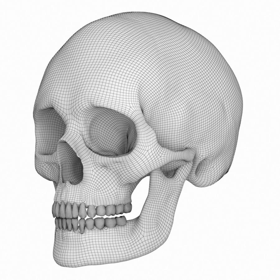 Caucasoid Female Skull royalty-free 3d model - Preview no. 11