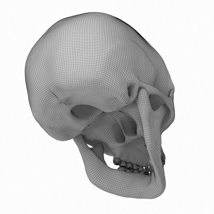 Caucasoid Female Skull royalty-free 3d model - Preview no. 12