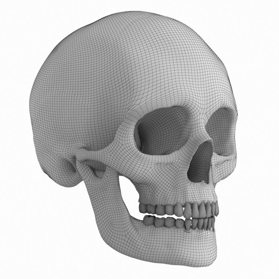 Caucasoid Female Skull royalty-free 3d model - Preview no. 10