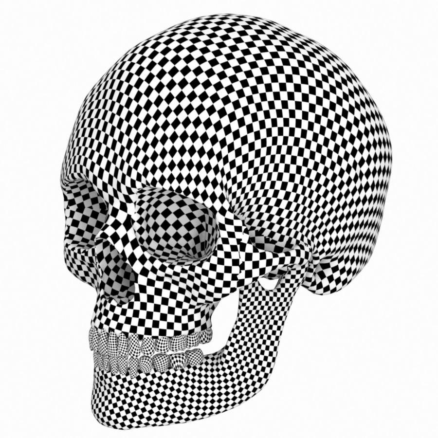Caucasoid Female Skull royalty-free 3d model - Preview no. 14