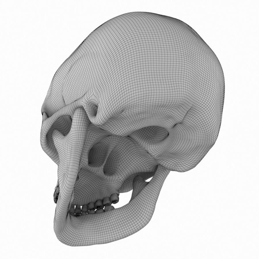 Caucasoid Female Skull royalty-free 3d model - Preview no. 13