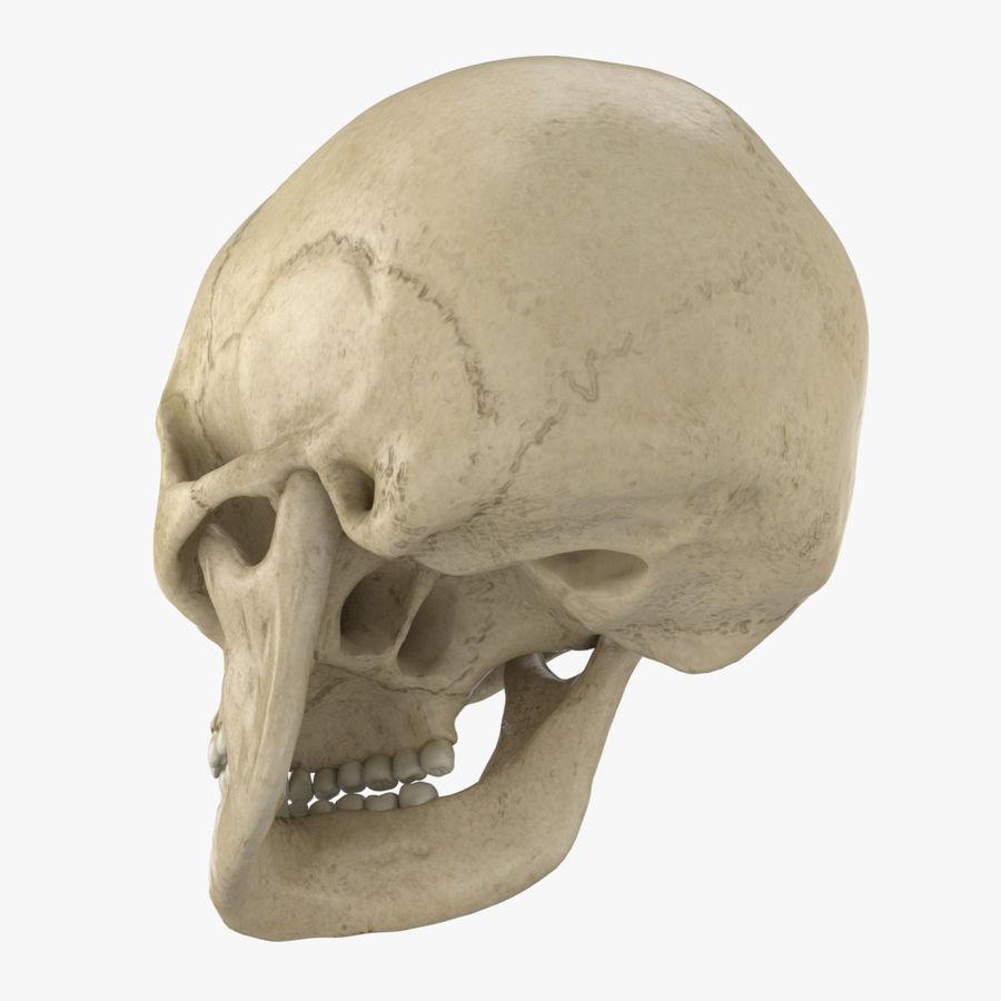 Caucasoid Female Skull royalty-free 3d model - Preview no. 6