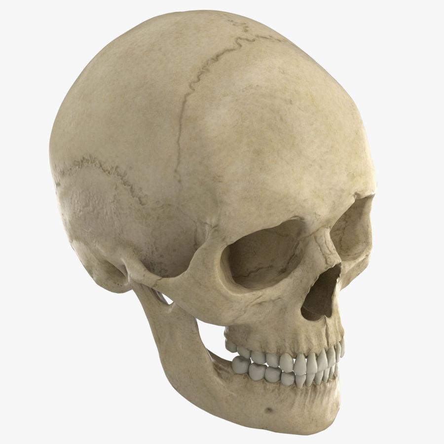 Caucasoid Female Skull royalty-free 3d model - Preview no. 2
