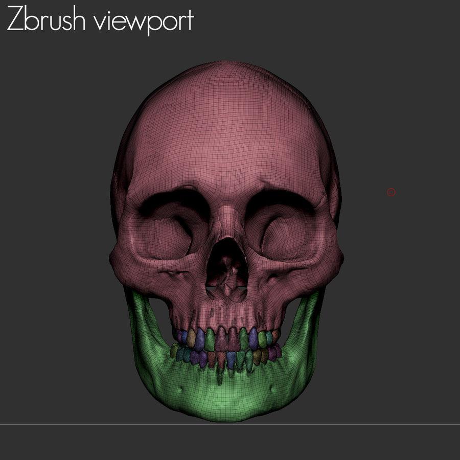Caucasoid Female Skull royalty-free 3d model - Preview no. 18