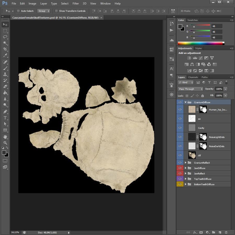 Caucasoid Female Skull royalty-free 3d model - Preview no. 21