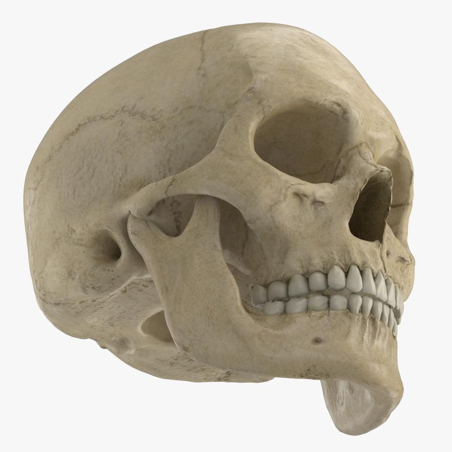 Caucasoid Female Skull royalty-free 3d model - Preview no. 4