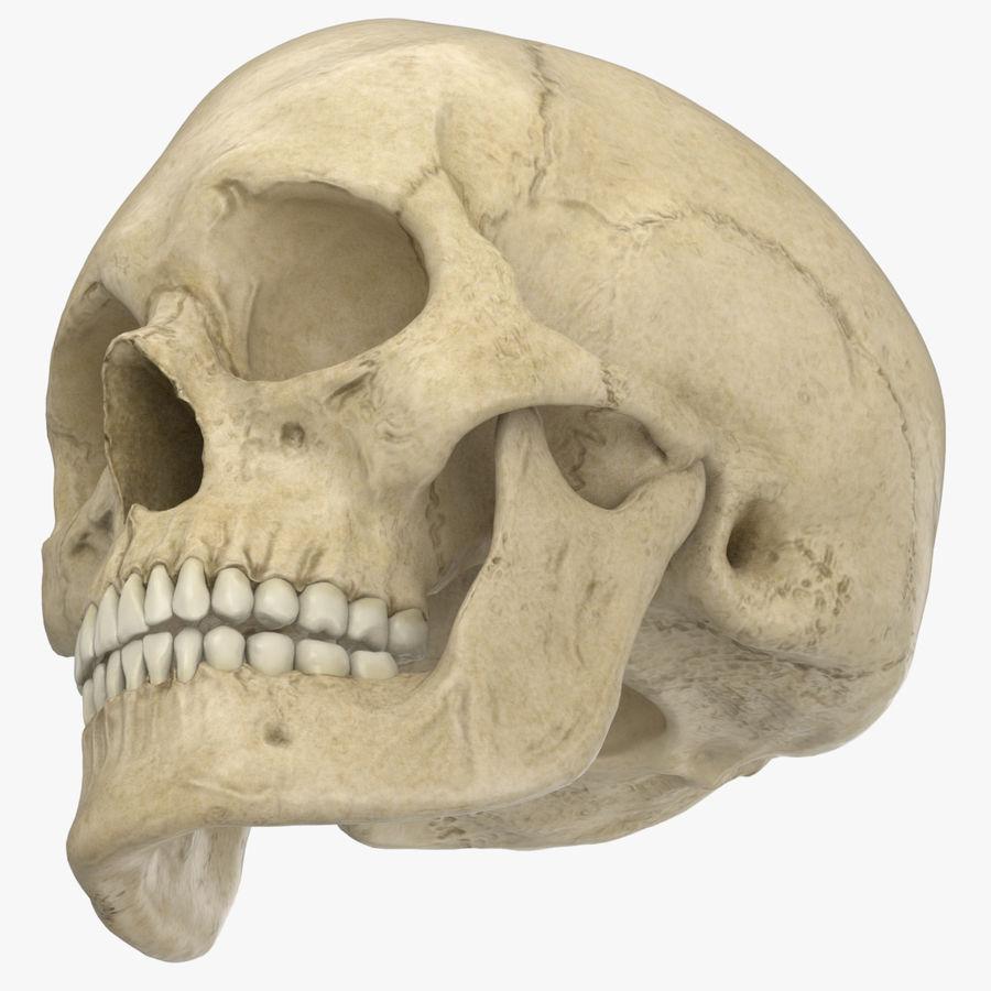 Caucasoid Female Skull royalty-free 3d model - Preview no. 5
