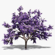 Flowering Jacaranda Tree 3d model