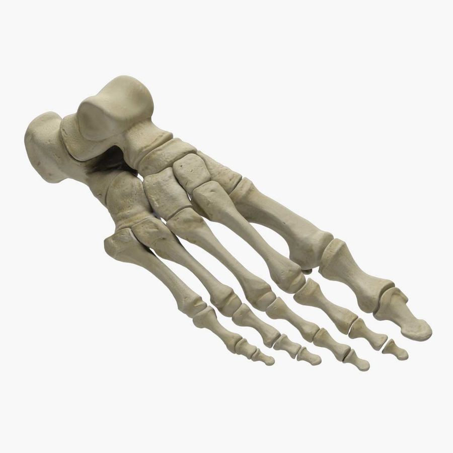 Skeleton Foot royalty-free 3d model - Preview no. 1
