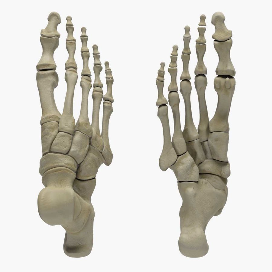 Skeleton Foot royalty-free 3d model - Preview no. 3