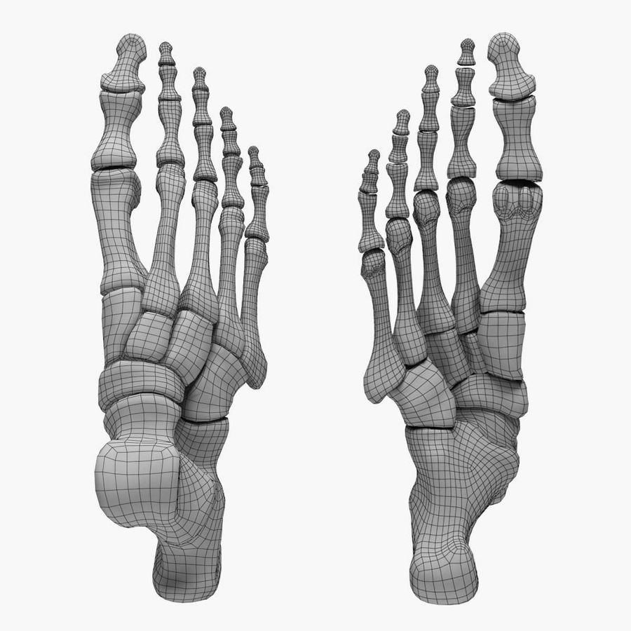Skeleton Foot royalty-free 3d model - Preview no. 5