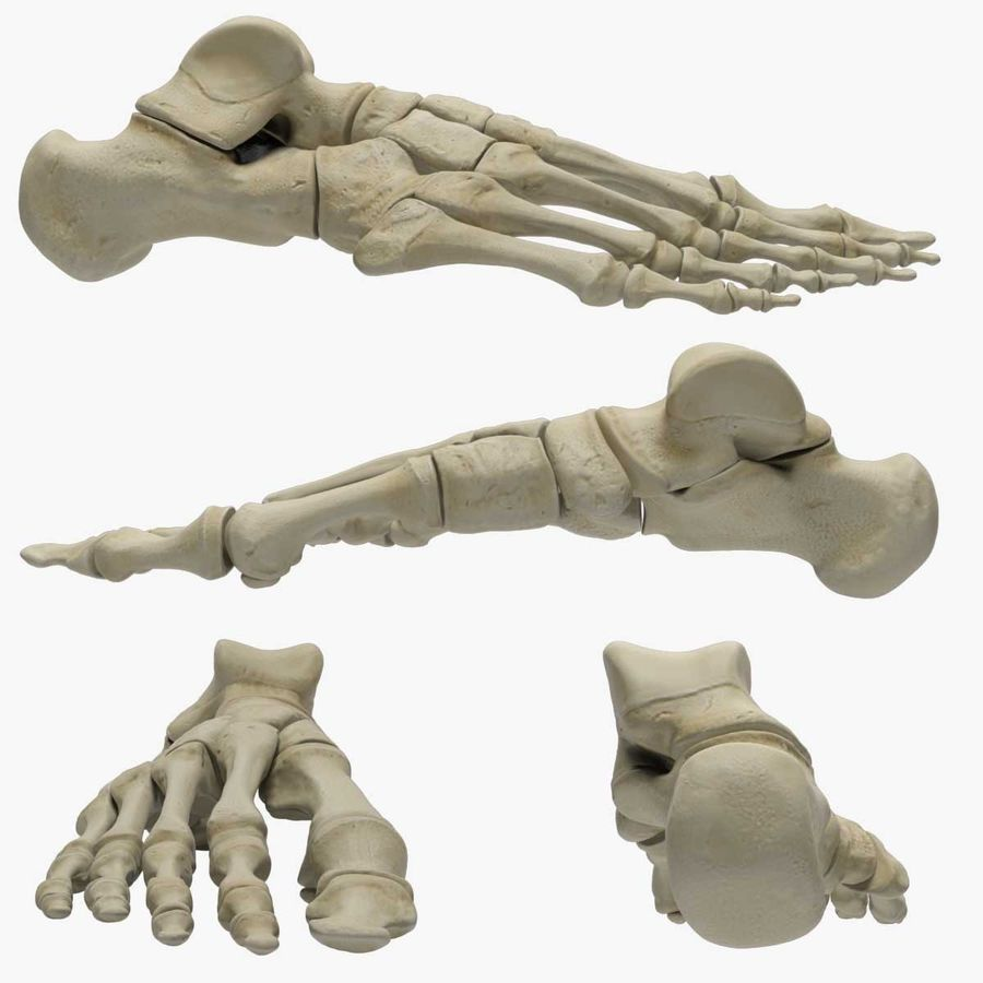 Skeleton Foot royalty-free 3d model - Preview no. 2