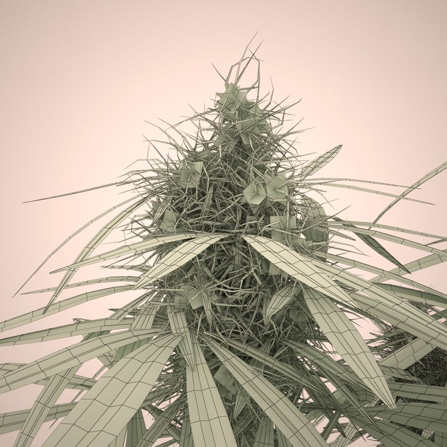 Cannabis Sativa Home Plant royalty-free 3d model - Preview no. 17