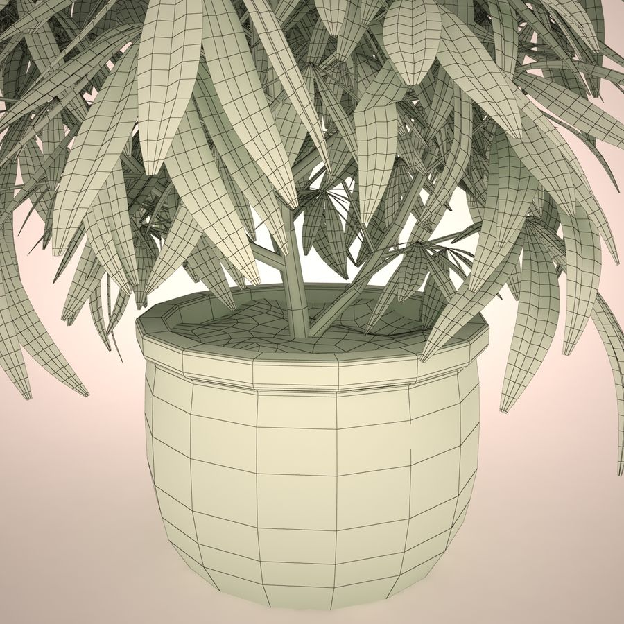 Cannabis Sativa Home Plant royalty-free 3d model - Preview no. 19