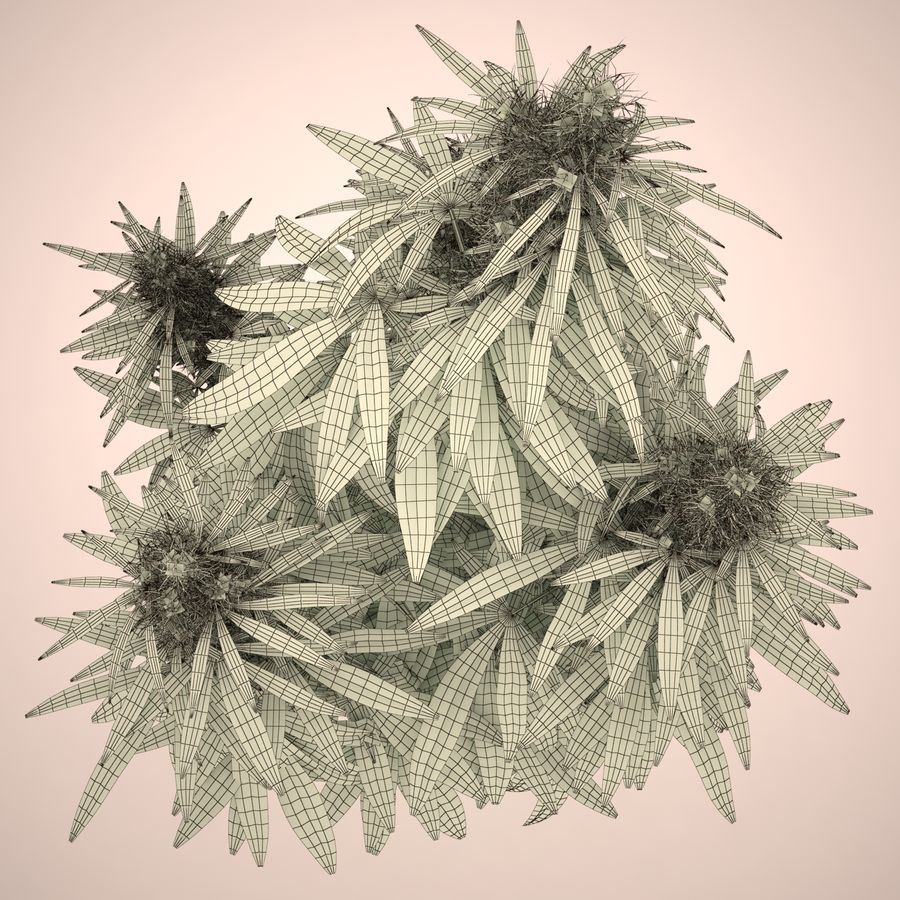 Cannabis Sativa Home Plant royalty-free 3d model - Preview no. 13