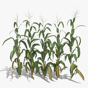 Corn Stalks Set 3d model