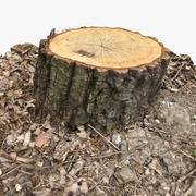 Ceppo di albero 12 3d model