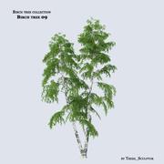 Birch tree 09 3d model