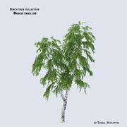 Huş ağacı 10 3d model