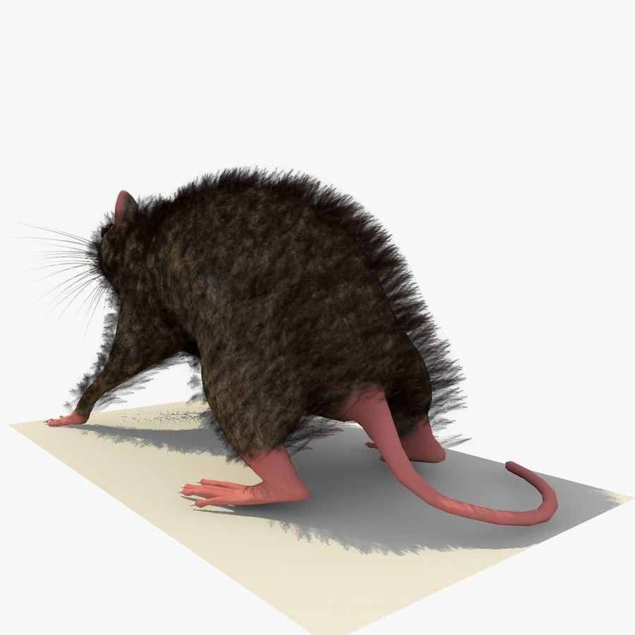 쥐 / 마우스 브라운 스탠딩 포즈 2 royalty-free 3d model - Preview no. 3