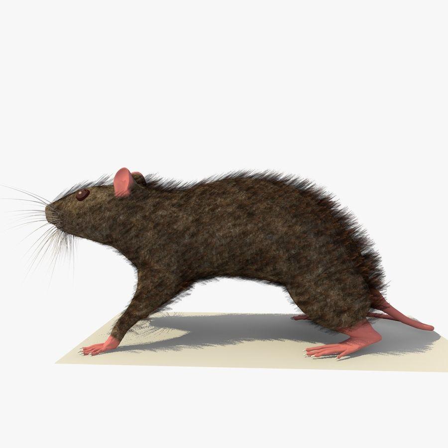 쥐 / 마우스 브라운 스탠딩 포즈 2 royalty-free 3d model - Preview no. 2