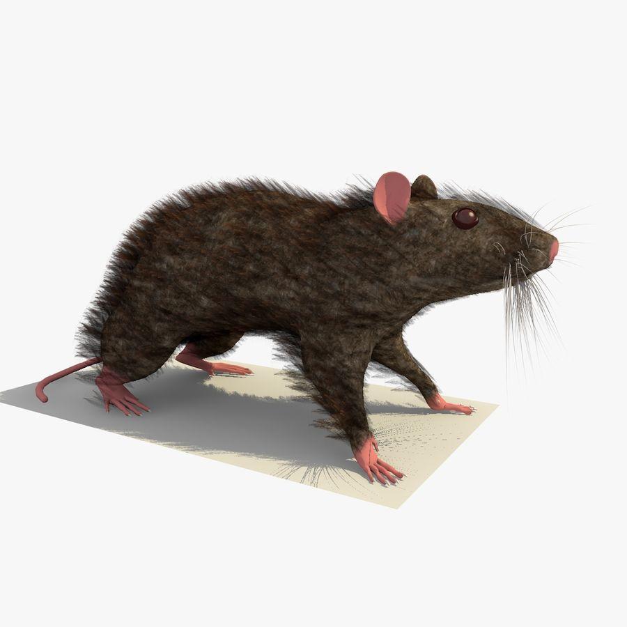 쥐 / 마우스 브라운 스탠딩 포즈 2 royalty-free 3d model - Preview no. 1