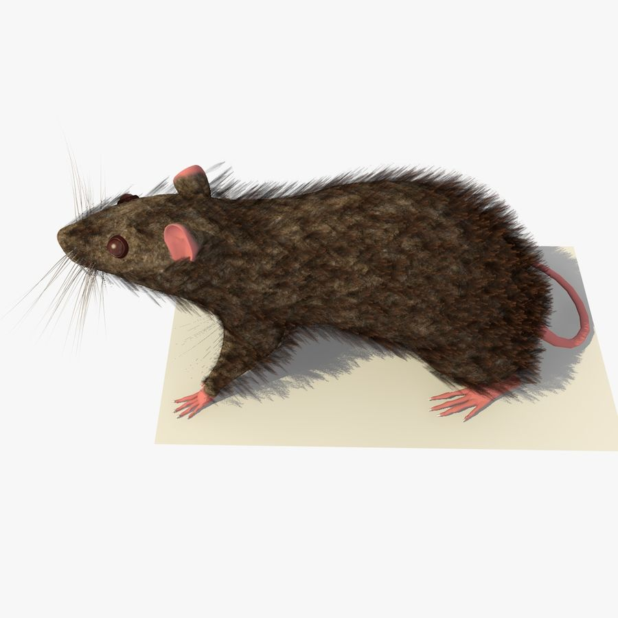 쥐 / 마우스 브라운 스탠딩 포즈 2 royalty-free 3d model - Preview no. 4